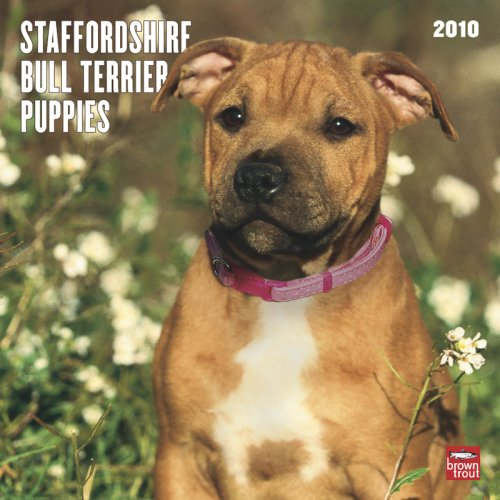Staffordshire Bull Terrier Puppies 2010 Square Wall