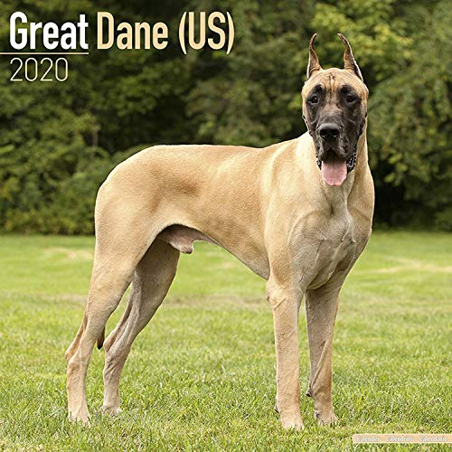 Great Dane Calendar 2020 - Dog Breed Calendar - Wall Calendar 2019-2020