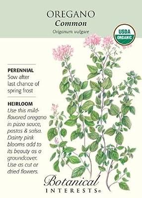 Common Oregano Seeds - 100 mg - Organic