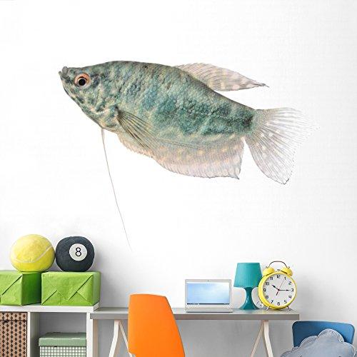 Blue Gourami Aquarium Fish Wall Decal by Wallmonkeys | Peel and Stick Graphic | 72