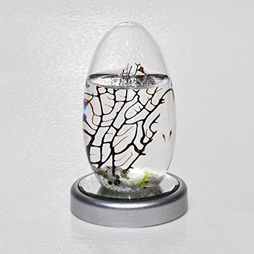 (EcoSphere Closed Aquatic Ecosystem, Small Pod with LED Base)