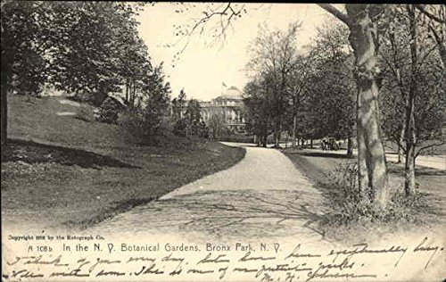In the Botanical Gardens Bronx, New York Original Vintage Postcard