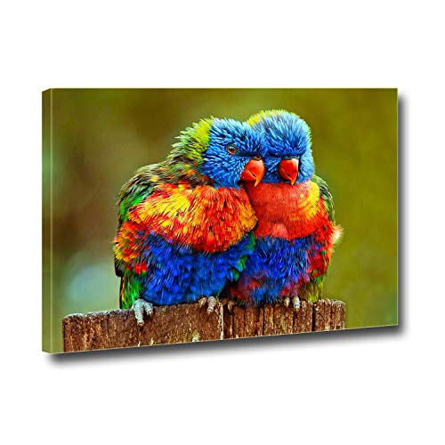 Anna Homey Décor Wall Art Colorful Parrots Lovely Birds Pictures Modern Artwork Landscape HD Photo Canvas Print Décor for Meeting Room Bedroom School Office Stretched and Framed Painting 12x16 in