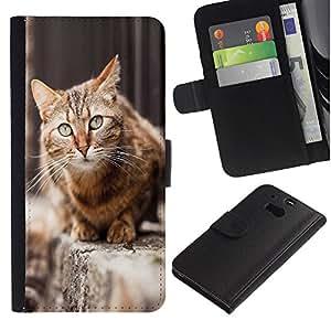 """HTC One M8 , la tarjeta de Crédito Slots PU Funda de cuero Monedero caso cubierta de piel ("""" House Cat Shorthair British Street Furry"""")"""