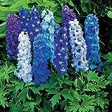 Magic Fountain Mix Delphinium Flower Seed Pack