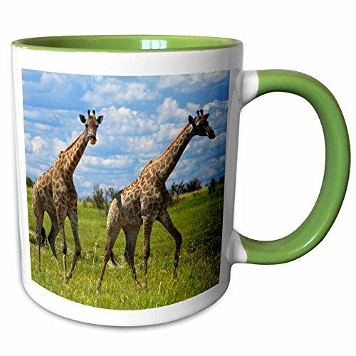 (3dRose Danita Delimont - David Wall - Giraffe - Giraffe Giraffa camelopardalis, Nxai Pan NP, Botswana, Africa - 15oz Two-Tone Green Mug (mug_187905_12))