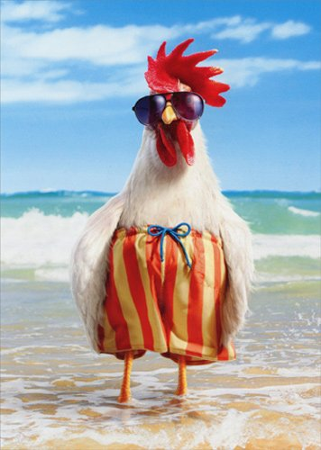 Rooster Wears Swimsuit - Avanti Funny Father's Day Card