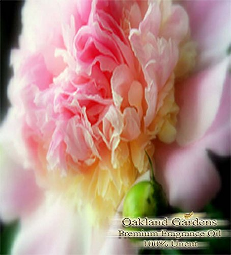 PEONY Fragrance Oil - 100% Premium Grade Uncut Oil - Gentle sweeps of peony are the first to bloom in this delightful bouquet. Pure elegance with strong, clean smell - BULK Frangrance Oil By Oakland Gardens (030 mL - 1.0 fl oz Bottle) (Peony Oil Fragrance)