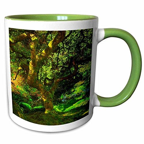 - 3dRose Danita Delimont - Michel Hersen - Japanese Gardens - Summer, Portland Japanese Garden, Portland, Oregon, USA - 15oz Two-Tone Green Mug (mug_191629_12)
