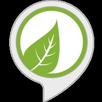 Ambient Sounds: Rainforest Sounds