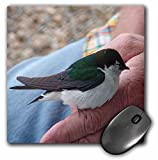 3dRose Jos Fauxtographee Realistic - A Man Holding an Injured Green, White and Gray Bird on His Finger in Pine Valley, Utah - MousePad (mp_53401_1)