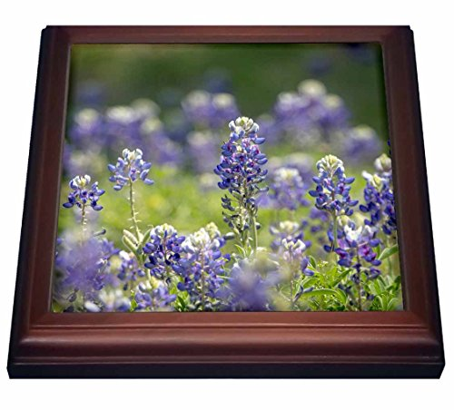 3dRose trv_205281_1 Texas Bluebonnets, Austin, Texas Trivet with Ceramic Tile, 8 by 8