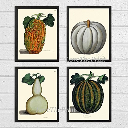 Botanical Set of 4 Prints Antique Beautiful Pumpkin Gourd Green White Orange Fall Garden Nature Home Room Decor Wall Art Unframed (Make A Halloween Poster Online)