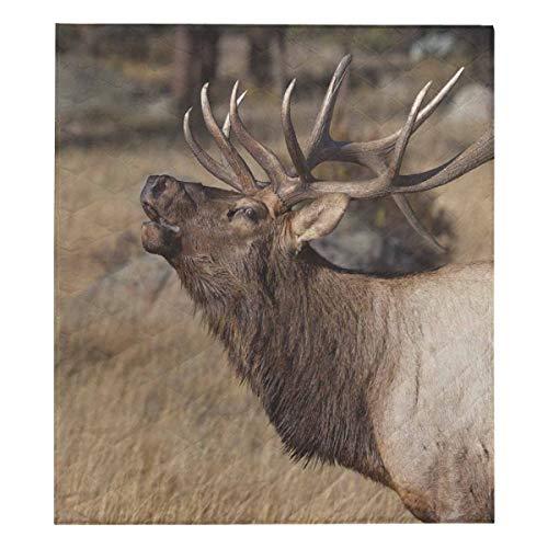 (InterestPrint Deer Wilderness Elk in Rocky Mountain National Cotton Quilt Luxurious Soft Twin Extra-Long 70