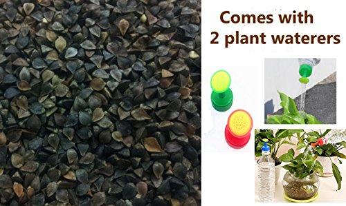 Plant Food Plots - 4