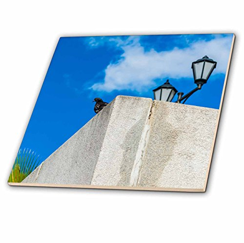Granite Green Tray (3dRose Alexis Photography - Birds - Image of black dove, green palm, granite parapet, lamp and blue sky - 8 Inch Ceramic Tile (ct_273221_3))