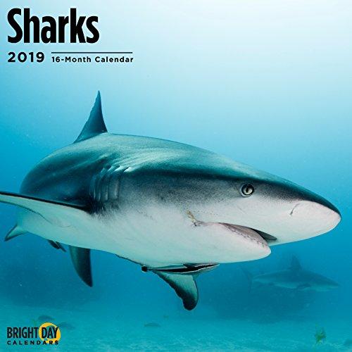 - Sharks 2019 16 Month Wall Calendar 12 x 12 Inches