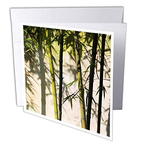 3dRose Danita Delimont - Patterns - Bamboo Casting Shadow on The Wall in Garden, Suzhou, Jiangsu, China - 1 Greeting Card with Envelope - Suzhou Jiangsu China