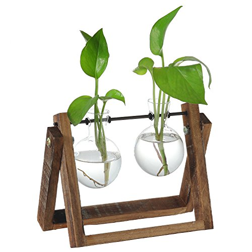 Clear Glass Planter Bulb Vases with Rustic Wood & Metal Swivel Holder Stand, Decorative Plant Terrarium (Containers Bulbs Plant)