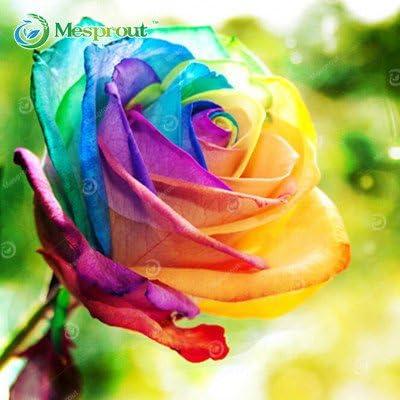 100 Pcs Rare Holland Rainbow Rose Seed DIY Plants Home Garden Decor