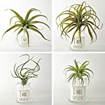 4Pack-Artificial-Pineapple-Grass-Air-Plants-Fake-Flowers-Faux-Succulents-Flocking-Tillandsia-Bromeliads-Home-Garden-Decor11-Inches