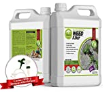 ECO Garden PRO - Organic Vinegar Weed Killer   Kid Safe Pet Safe   Clover Killer for Lawns   Moss Killer   Green Grass & Poison Ivy Killer   Spray Ready Glyphosate Free Herbicide (1 Gallon)