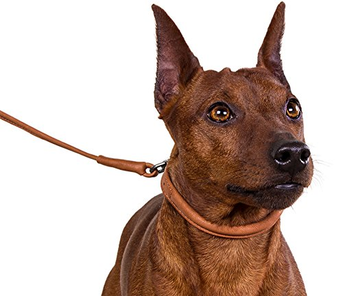 Pictures of CollarDirect Rolled Leather Dog Collar Soft Padded 2