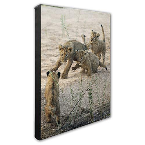 (Photo File Lion Cubs Canvas Photo, 16
