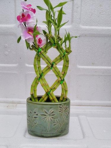 Jmbamboo Braided Style Bamboo Arrangement product image