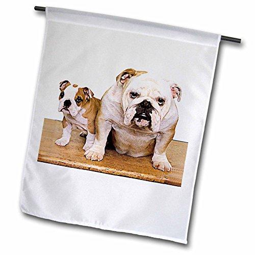 3dRose Dogs Bulldog - British Bulldog Male - 18 x 27 inch Garden Flag (fl_8578_2)