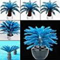 Seed House-KOUYE 100 Pcs Winter Hardy Blue Palm Seed Rare Dwarf Palm Seeds Tree Seeds Hardy Perennial Garden Plants Seed Indoor Plants