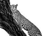 00 Africa Leopard Décor Wildlife Décor Animal Wall Art Nature Photography Man Cave Décor Man Cave Gift Men's Gift Male Decor