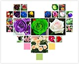 200 Seeds 24 colors rare rainbow rose flower seeds Multi-color Plants Home Garden bonsai colorful rose flower seed