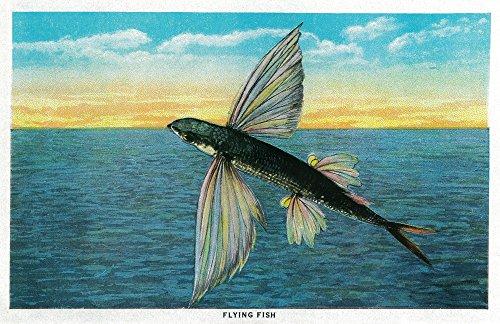 Flying Fish at Catalina Island (36x54 Giclee Gallery Print, Wall Decor Travel ()