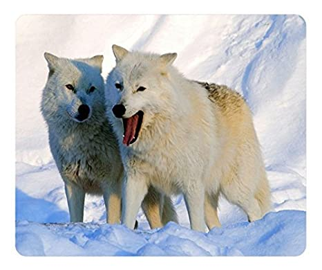 Image result for arctic wolves cute