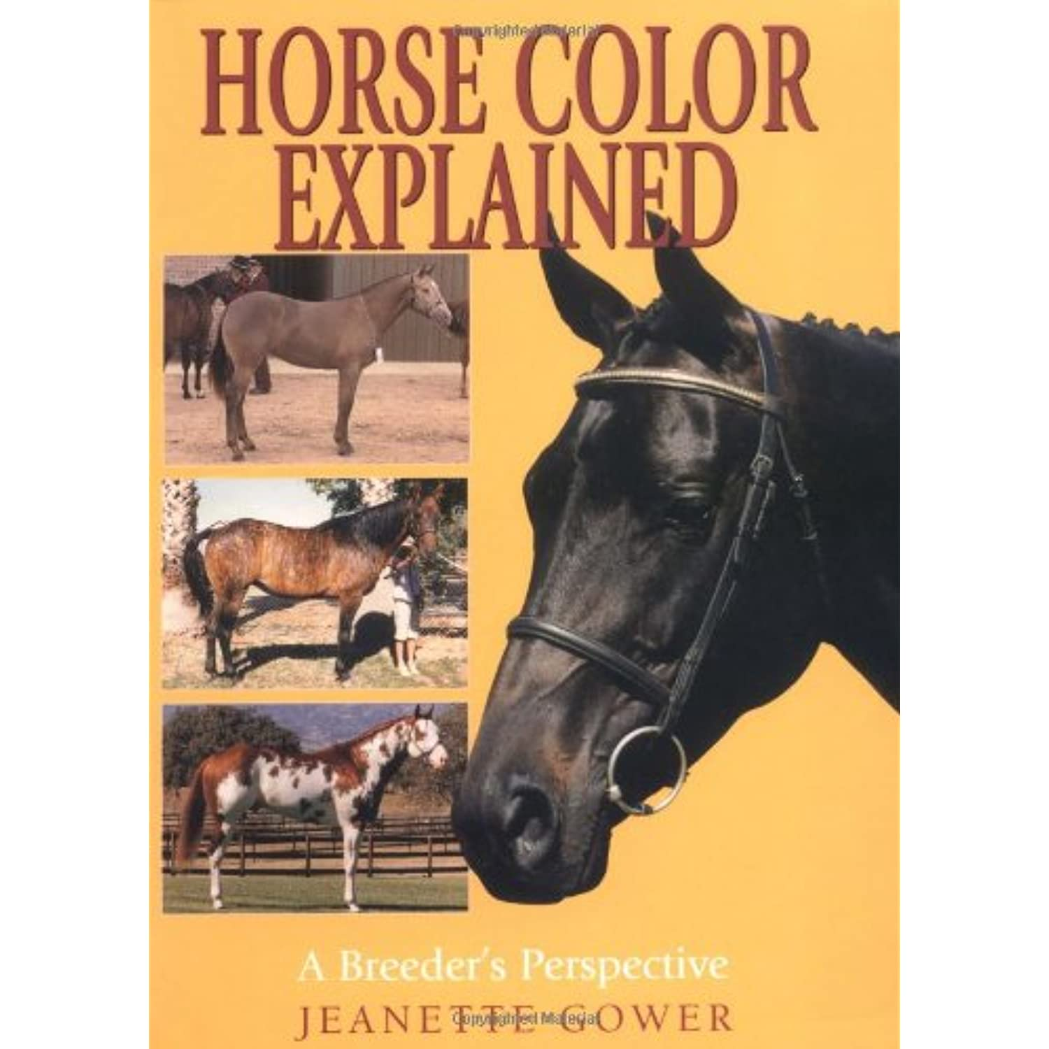 Horse Color Explained A Breeder's Perspective Gower, Jeanette ...