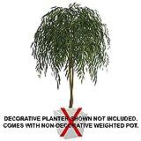 7' Willow Silk Tree w/Pot -Green