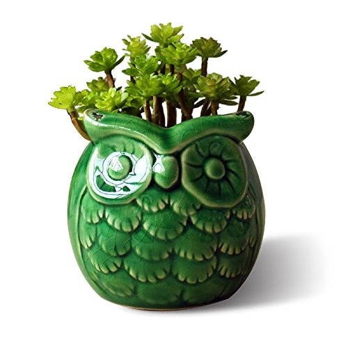GeLive Owl Planter Succulent Planter Flower Pot Container Decorative Vase Garden Cart Window Box Pen Holder (Green)