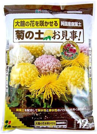 花ごころ 菊の土お見事! 12L