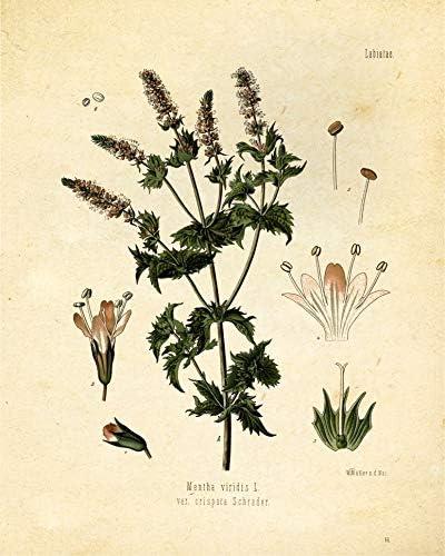 home, kitchen, wall art,  posters, prints 10 discount Botanical Prints Tea Herbalism Herbs Vintage Wall Art deals