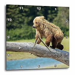 3dRose Danita Delimont - Bears - USA, Alaska, Grizzly Bear Cub balancing on a fallen tree. - 15x15 Wall Clock (dpp_278411_3)