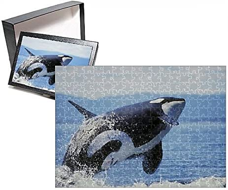 amazon com photo jigsaw puzzle of killer orca whale breaching