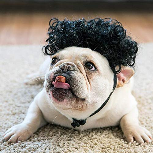 Agirlvct Funny Dog Costumes,Super Cute Pet Hair Afro Curly Wigs with Elastic Chin Strap,Halloween Chirstams Costumes Cosplay Party for Large Medium Dog Wild-curl Up Headwear(Black) ()