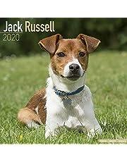 Jack Russell Calendar 2020