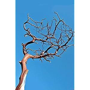 Manzanita Branches Red Bark 16-18in - Excellent Home Decor - Indoor & Outdoor 88