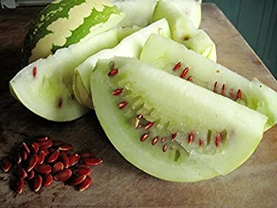 10 Seeds Citrullus lanatus var. citroides Wild Watermelon