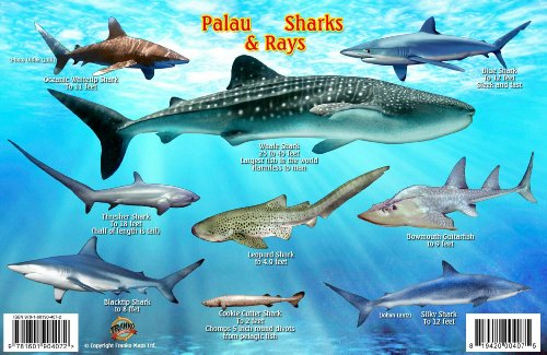 Palau Sharks & Rays Guide Franko Maps Laminated Fish Card