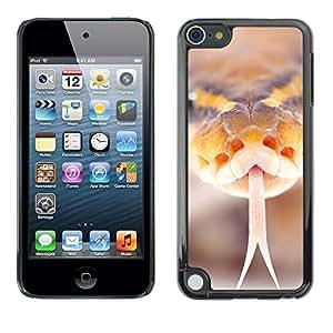 [Neutron-Star] Snap-on Series Teléfono Carcasa Funda Case Caso para Apple iPod Touch 5 [Serpiente Silbido Naranja Macro Primer plano Naturaleza]