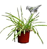 Bird Shaped Clear Glass Plant Flower Holiday Automatic Watering Spike Stake Water Feeder