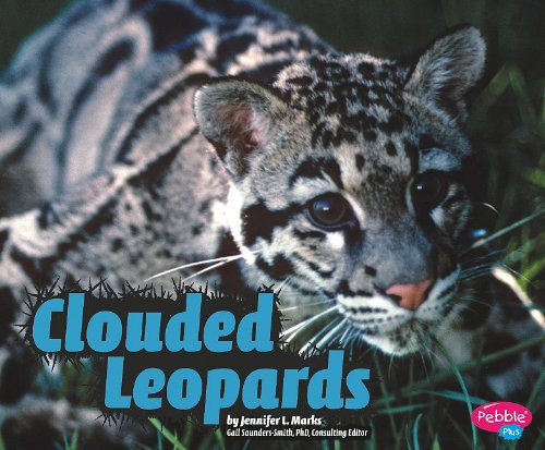 Clouded Leopards (Wildcats)